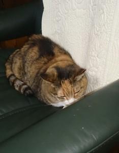 猫のタマちゃんとはなちゃん写真
